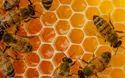 Honey Testing Lab