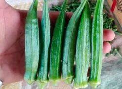 Maharashtra A Grade Green Fresh Lady Finger, Gunny Bag, Packaging Size: 20 Kg