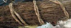 棕色Chirita为Ayurvedic,等级标准:医学级