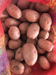 A Grade Laura Red Fresh Potatoes, Packaging Type: Gunny Bag, Packaging Size: 50 Kg