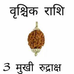 2 Mukhi Rudraksha Certified