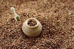 25 Kg Organic Buckwheat Seeds