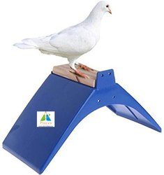Pigeon Perch
