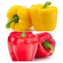 A Grade Red Yellow Capsicum, Maharashtra, Packaging Size: 20 Kg