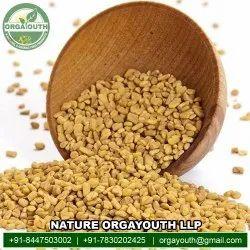 Natural Organic Fenugreek (Methi), Packaging Type: Gunny Bag, Packaging Size: 25 KG
