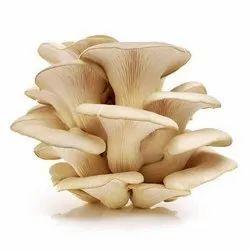 Dried Mushroom Oyster Mushrooms