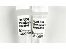 实验室液体10x尿嘧啶DNA糖基糖,用于科学研究,包装尺寸:1毫升