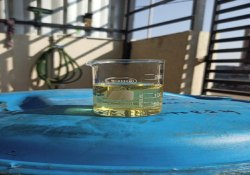 Castor Oil, Packaging Type: Barrel