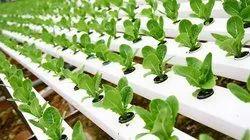 Soil Less Farming