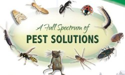 House Lizards Pest Control Services