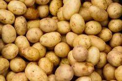 Brown A Grade Fresh Potato, Gunny Bag, Packaging Size: 20 kg