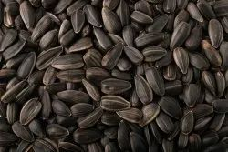 Dried Black Sunflower Oil Seeds, For Cooking