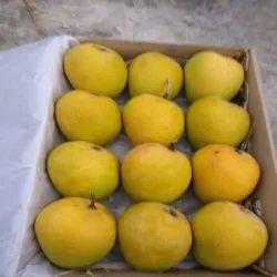Organic Yellow Alphonso Mango, Carton, Packaging Size: 5 Kg
