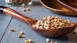 Dried Green ORGANIC CORIANDER SEEDS, For Cooking, Packaging Size: 20 And 40 Kg