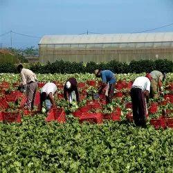 熟练的农业劳动合同服务,潘印度