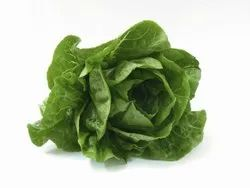 Green Pesticide Free  (for Raw Products) A Grade Romaine Lettuce