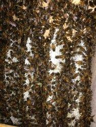Commercial Fume-based Treatment Bee Hive Removal