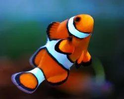 Marine Water Fish