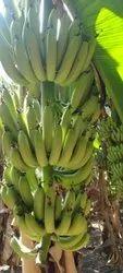 A Grade Green Banana, Packaging Size: 7 Kg, Packaging Type: Carton