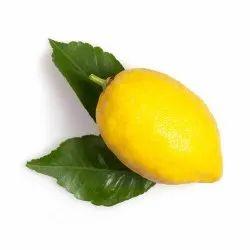 Lemon 10 Fold