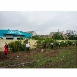 Office Staff Tree Plantation