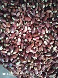 Cowpea Seed