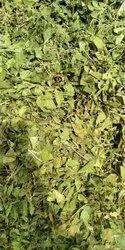裸子树提取物,叶子,包装尺寸:5公斤