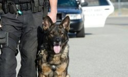 Dog Squad Security Service