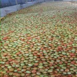 20 Kg Fresh Green Tomatoes