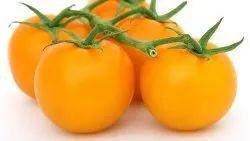 A Grade Fresh Yellow Organic Tomato, Packaging Type: Gunny Bag, Packaging Size: 5 Kg