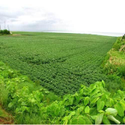 Estate Agents For Agricultural Land Service