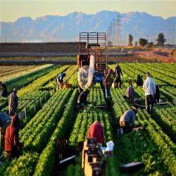 技术农业人力服务,潘印度