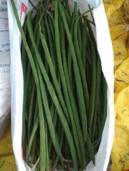 Maharashtra A Grade Green Fresh Drumstick, Gunny Bag, 20 Kg