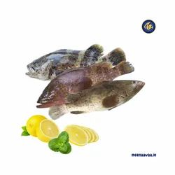 Red Grouper Fish, Packaging Type: Box