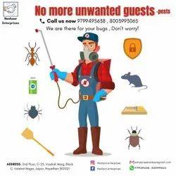 Spider Pest Control Services