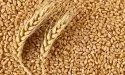 Paras Beej Hybrid Certified Wheat Seeds, For Agriculture, Packaging Size: Packet