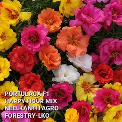 Portulaca Happy Hour Mix