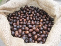 Solid Nutmeg With Shell, Packaging Type: Packet, Packaging Size: 1 Kg