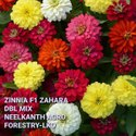 Zinnia Zahara DBL Mix