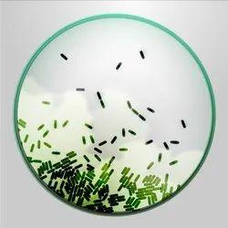 Anaerobic Bacteria Culture