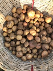 Brown B Grade Fresh Potato, Gunny Bag
