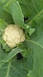 White A Grade Fresh Cauliflower, 20Kg etc, Packaging: Carton