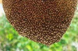 Commercial Spray Honey Bee Hive Removal