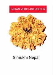 8 Mukhi Nepali Rudraksha
