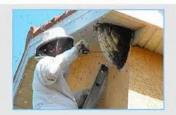 Honey Bee Removal Services