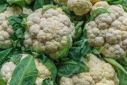 White A Grade Fresh Cauliflower Vegetable, Gunny Bag