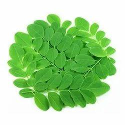 Moringa Oleifera Leaf Extract 40%