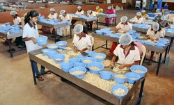 1 To 7 Days Cashew Processing Training, Location: India