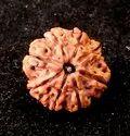 8 Mukhi Rudraksha Beads