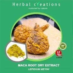 Maca Root Dry Extract